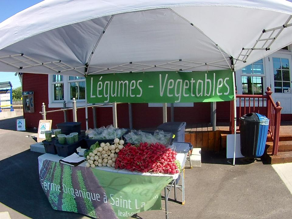 Leafs vegetable produce